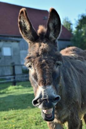 donkey-1470197_640